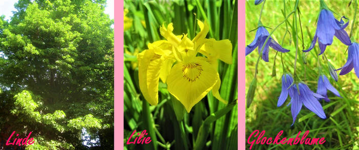 A botanical Name (Picture puzzle)