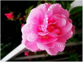 pink drips by skykeys