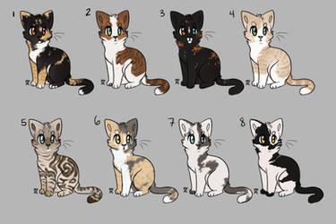 Cat Adopts closed by becauseDia