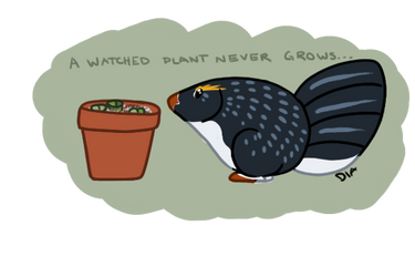 A watched plant never grows by becauseDia