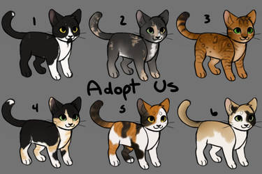 Cat Adopts (Reduced - OPEN) by becauseDia