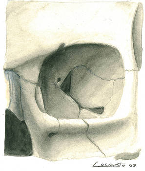 Skull eye socket - study