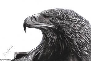 eagle head by KondaArt