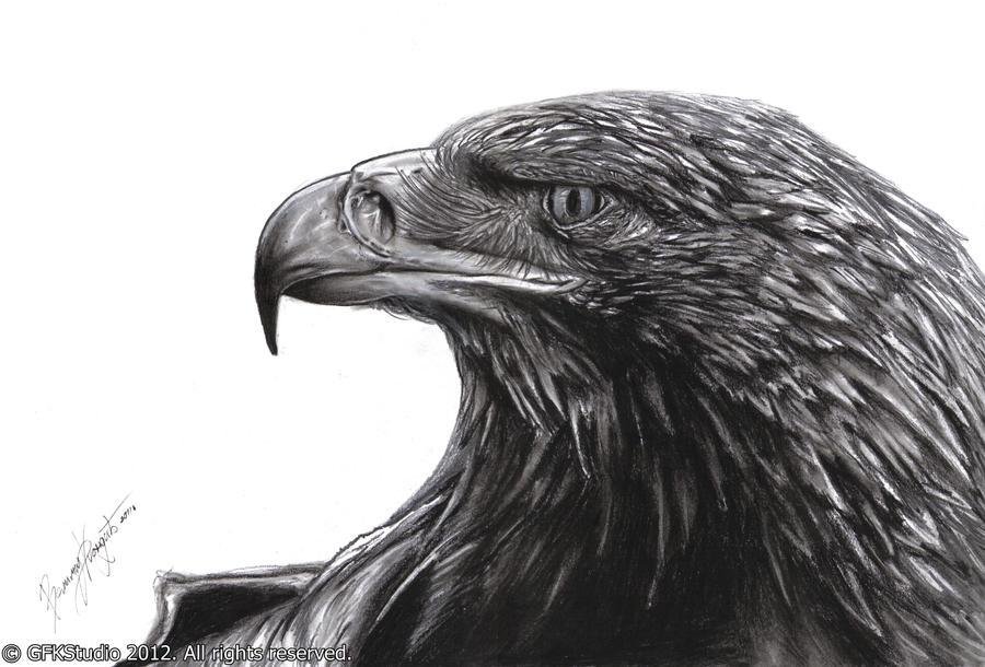 eagle head by KondaArt on DeviantArt