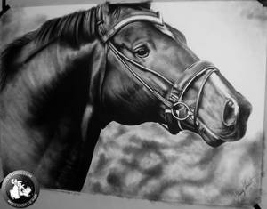 horse drawing (life-size)