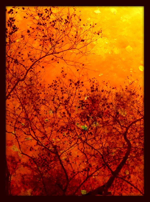 Reflet de feu by Stolvezen