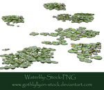 Waterlily-Stock-by-GothLyllyOn-Stock