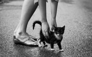 Cat in the Rain by predicttheday
