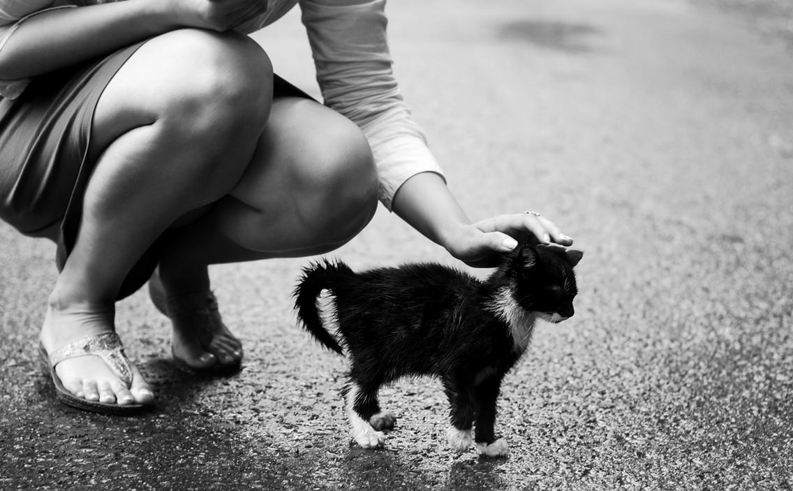 cat in the rain and where Free essay: marriage in ernest hemingway's cat in the rain in today's society, people have the assumptions that we have evolved far beyond past cultural.