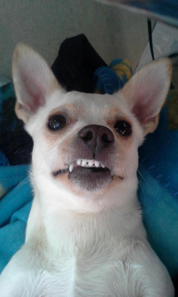 Gracie Smile by blackzero04