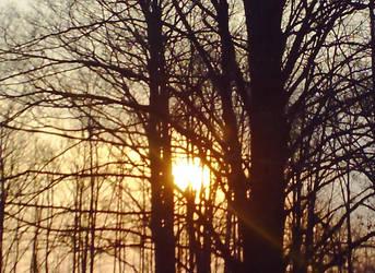 Forested sunrise by famguyfan5000