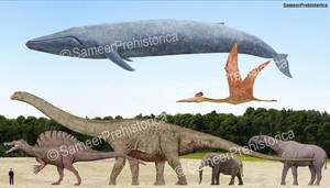 Blue Whale and other giants