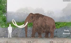 Woolly Mammoth by SameerPrehistorica