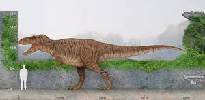 Tyrannosaurus Rex size by SameerPrehistorica