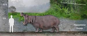 Hippopotamus Gorgops by SameerPrehistorica