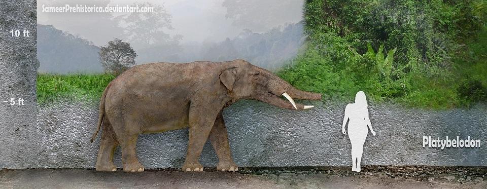 Platybelodon1-738x591.jpg