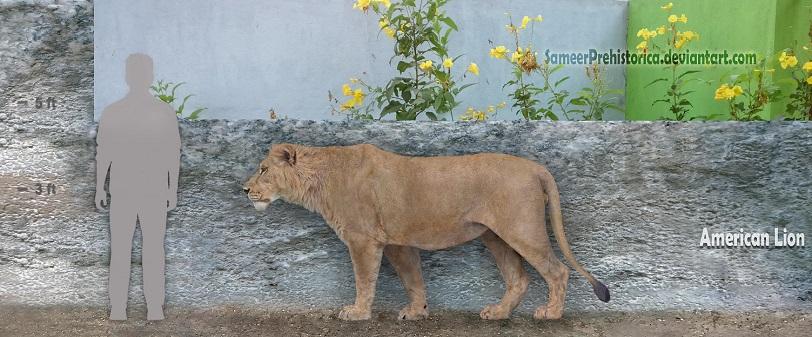 American Lion by SameerPrehistorica