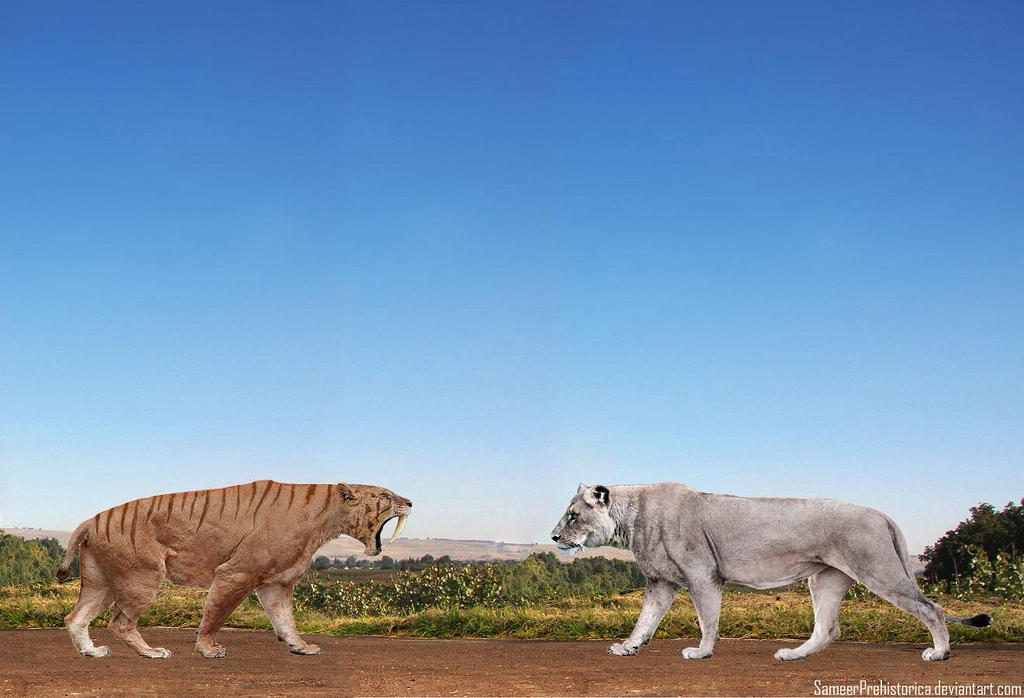 Smilodon Populator vs American Lion by SameerPrehistorica on ...