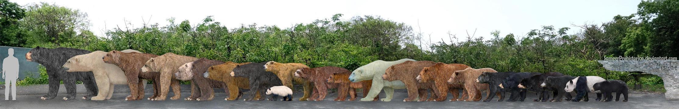 Ursidae by SameerPrehistorica