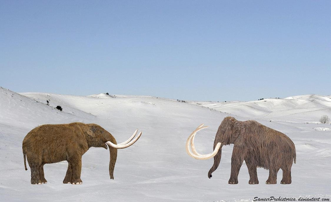 Difference Between Mammoth And Mastodon Pictures to Pin on ...