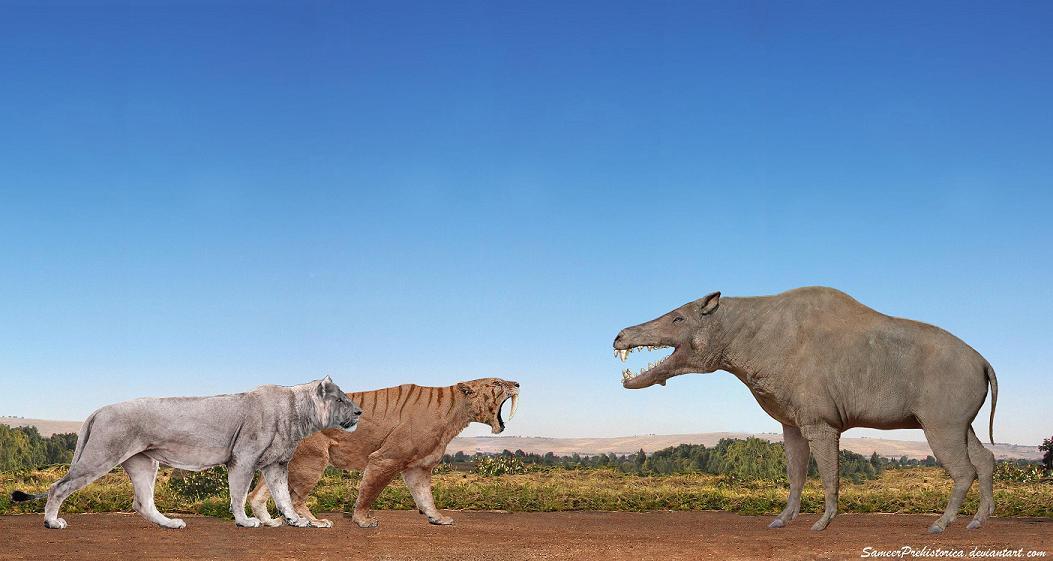 Smilodon Populator American Lion Vs Daeodon By