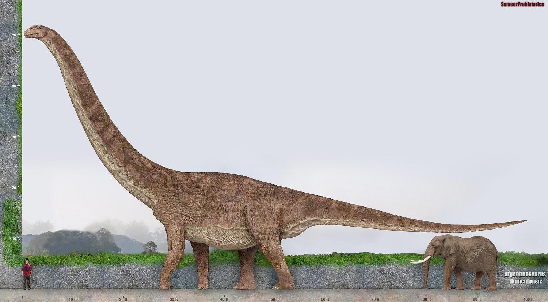 Argentinosaurus Size by SameerPrehistorica