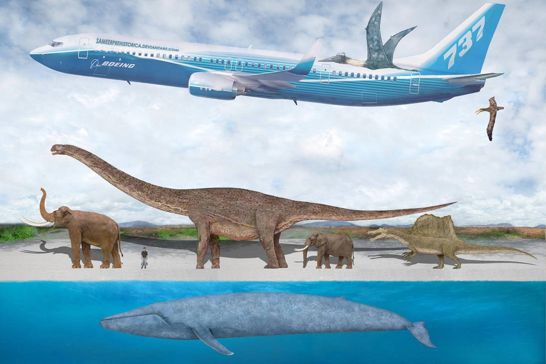 Blue Whale Size Comparison 2 by SameerPrehistorica on ...