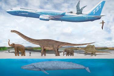 Blue Whale Size Comparison 2 by SameerPrehistorica