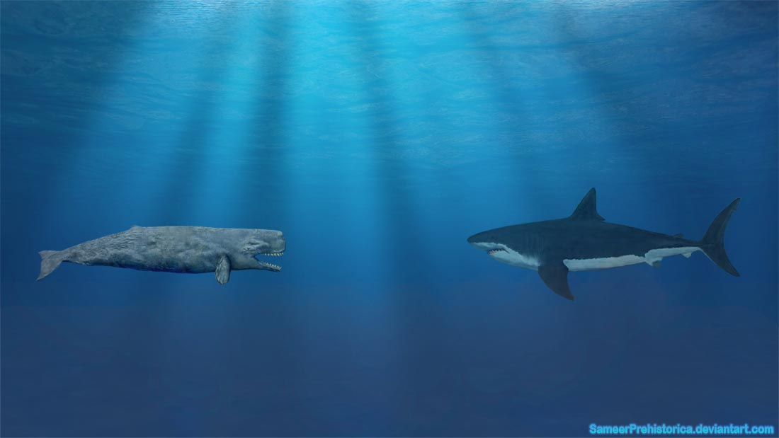 Image result for Livyatan melvillei and megalodon