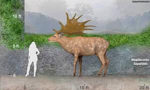 Megaloceros by SameerPrehistorica