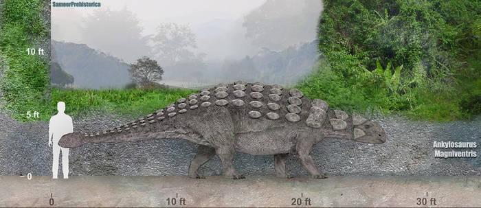 Ankylosaurus Size by SameerPrehistorica