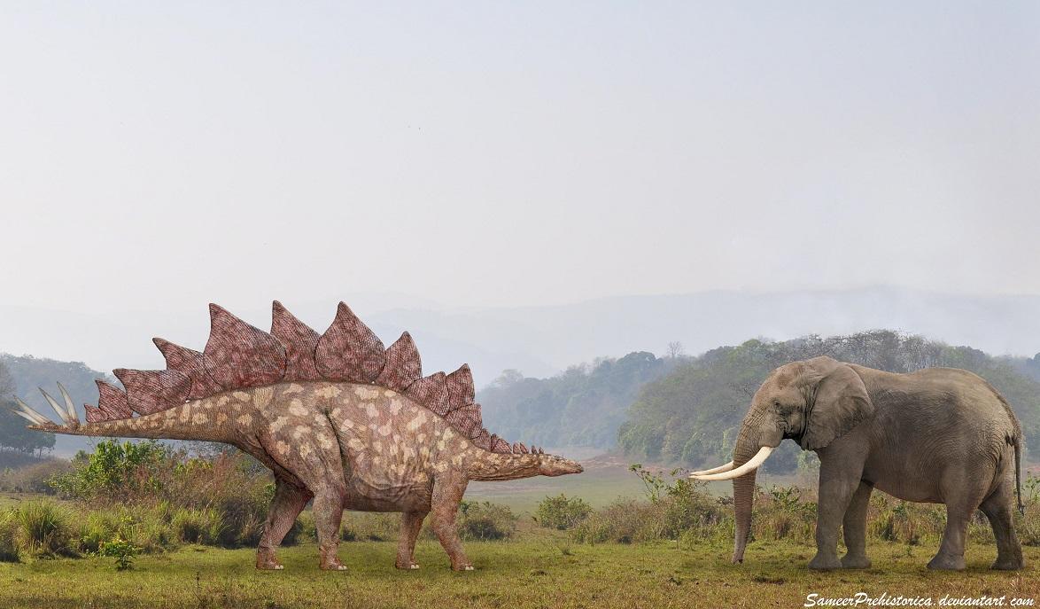 Stegosaurus Vs African Elephant | Dinosaur Home