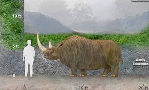 Woolly Rhinoceros Size