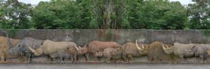 Rhinocerotidae by SameerPrehistorica