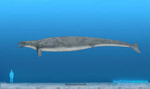 Basilosaurus by SameerPrehistorica