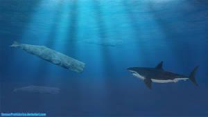 Sperm Whale vs Megalodon