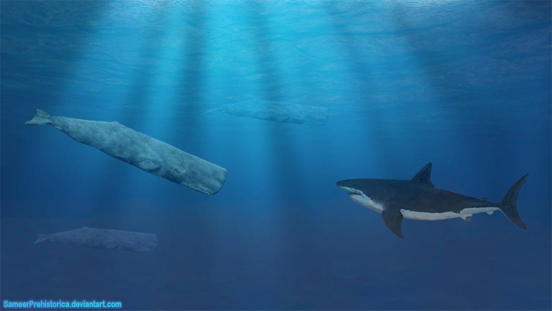 Sperm Whale vs Megalodon by SameerPrehistorica on DeviantArt