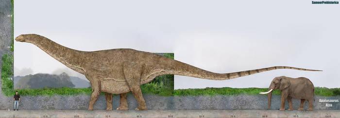 Apatosaurus Size by SameerPrehistorica