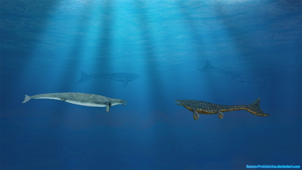 Photo Collection Basilosaurus By Sameerprehistorica On