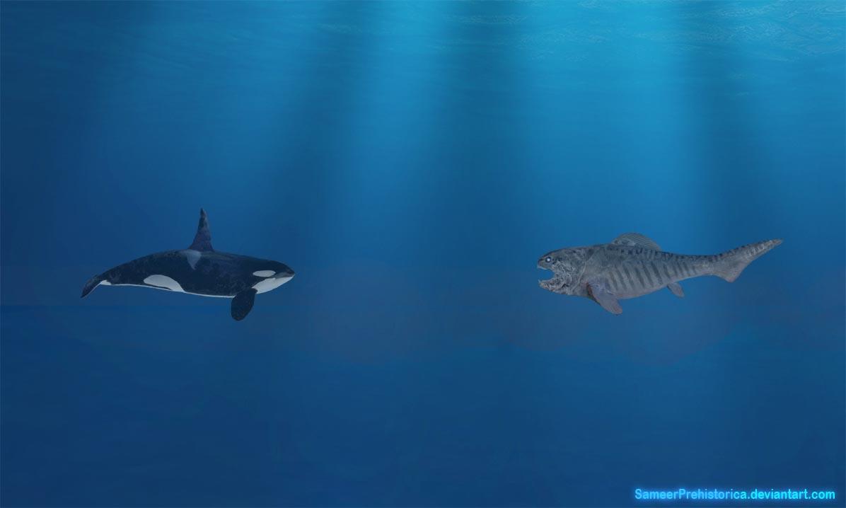 Orca vs Dunkleosteus