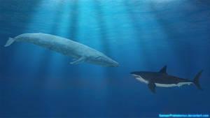 Blue Whale vs Megalodon