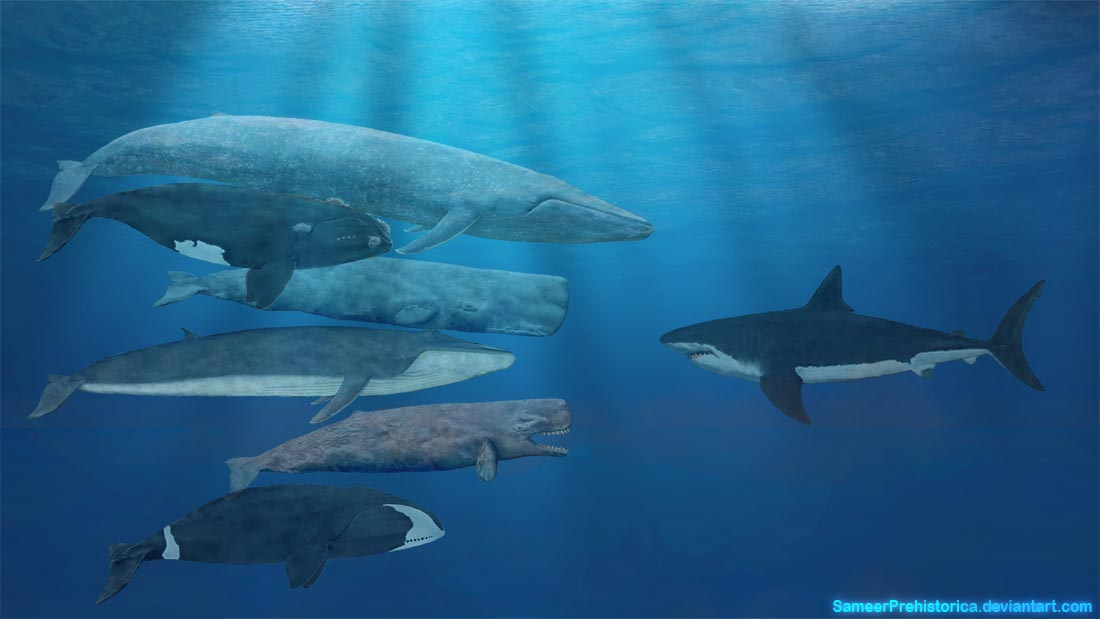 Whales And Megalodon.. | Dinosaur Home