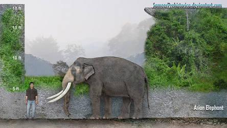 Asian Elephant by SameerPrehistorica