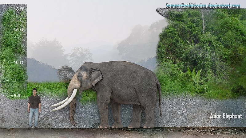 Prehistoric Plants Alive Today Asian Elephant by Same...