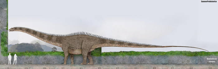 Diplodocus by SameerPrehistorica