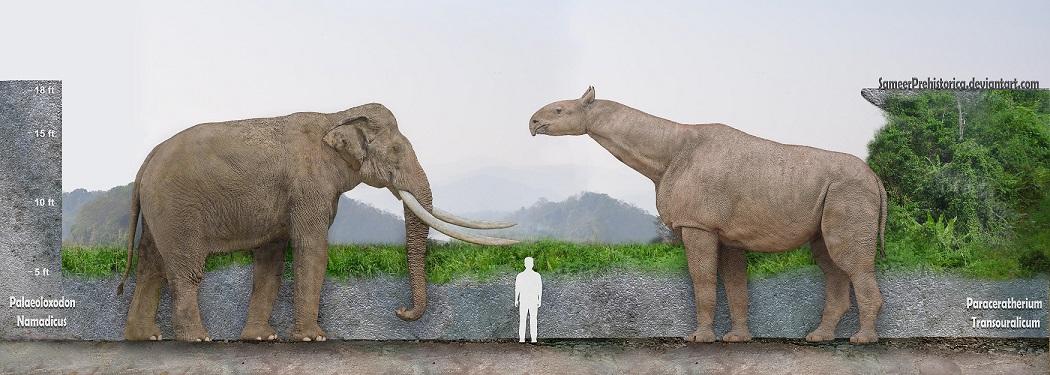 Largest Land Mammal Ever by SameerPrehistorica on DeviantArt