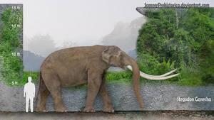 Stegodon Ganesha