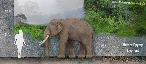Borneo Pygmy Elephant by SameerPrehistorica