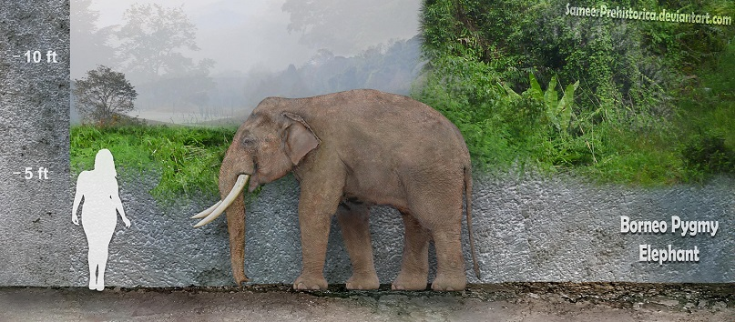 borneo_pygmy_elephant_by_sameerprehistor