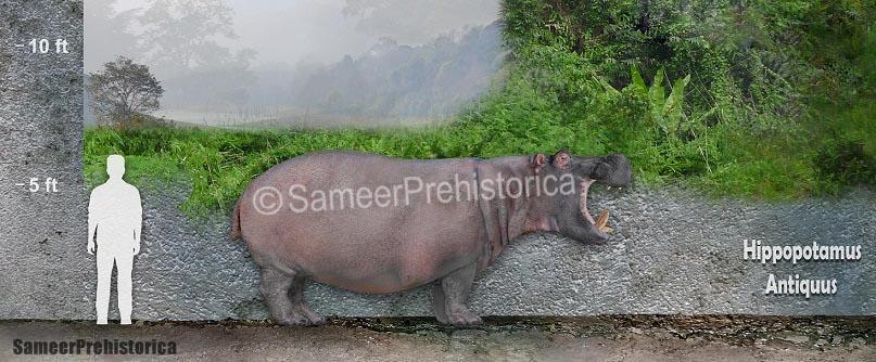 hippopotamus_antiquus_size_by_sameerprehistorica_d8rdalr-fullview.jpg?token=eyJ0eXAiOiJKV1QiLCJhbGciOiJIUzI1NiJ9.eyJzdWIiOiJ1cm46YXBwOjdlMGQxODg5ODIyNjQzNzNhNWYwZDQxNWVhMGQyNmUwIiwiaXNzIjoidXJuOmFwcDo3ZTBkMTg4OTgyMjY0MzczYTVmMGQ0MTVlYTBkMjZlMCIsIm9iaiI6W1t7ImhlaWdodCI6Ijw9MzM0IiwicGF0aCI6IlwvZlwvNDRjN2YyZWQtOTI2YS00OGRiLTk5OTAtMzZhZWJlZTJkZjViXC9kOHJkYWxyLWViOGQ2NWZkLTU4NTMtNGQ1Mi1iMGMzLTNkOTdlYWM4YTc5Ni5qcGciLCJ3aWR0aCI6Ijw9ODA3In1dXSwiYXVkIjpbInVybjpzZXJ2aWNlOmltYWdlLm9wZXJhdGlvbnMiXX0.YnnFzozmPh8k5Y11mJsBzIB9_nSUI171RoU44tCWFKY